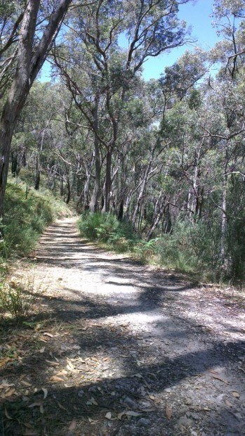 Mountain Biking in Cleland Conservation Park, Adelaide
